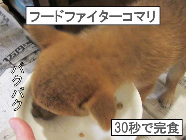 柴犬コマリ ふやかしフード