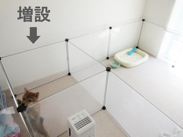 柴犬コマリ 柴犬 ペットフェンス