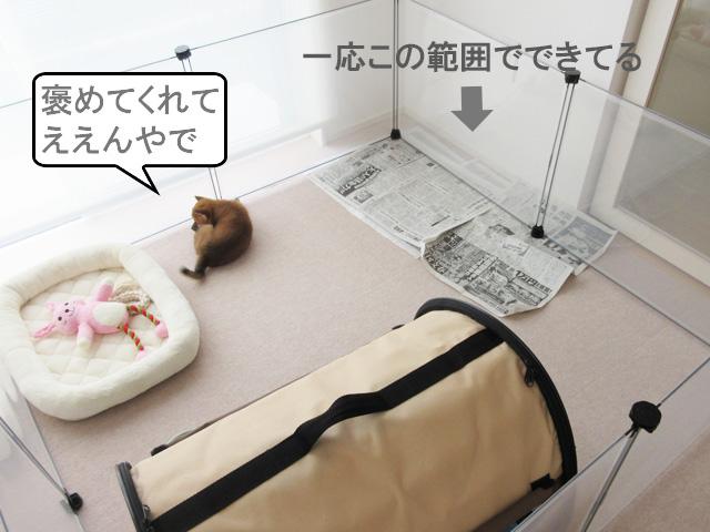 柴犬コマリ トイレトレーニング