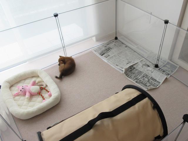 トイレトレーニング,子犬のしつけ
