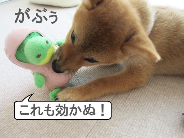 柴犬 柴犬コマリ おもちゃ