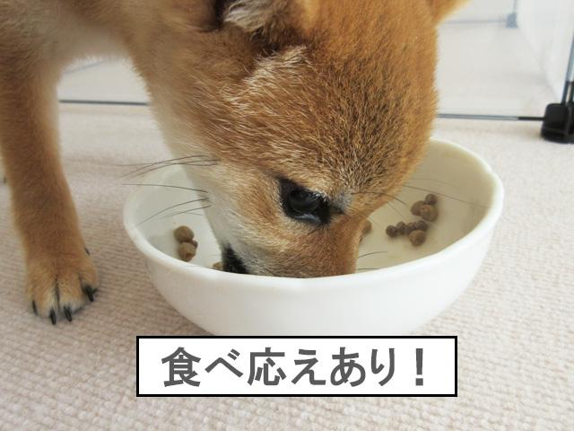 柴犬 柴犬コマリ カリカリフード