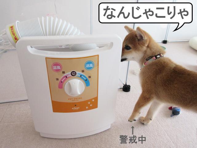 柴犬 柴犬コマリ ペット用ドライヤー