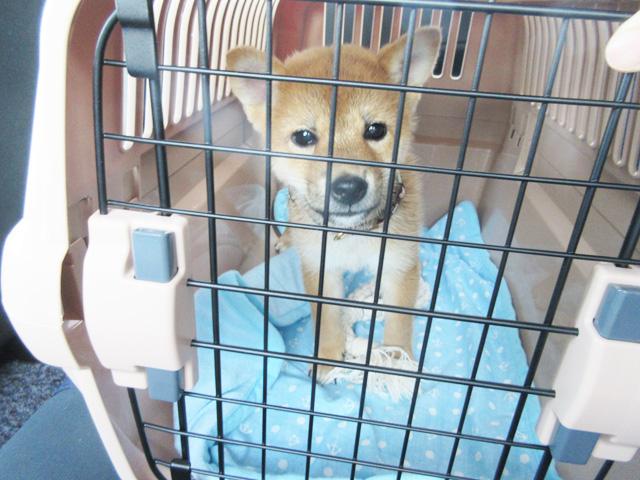 リッチェル キャンピングキャリー クレート 子犬