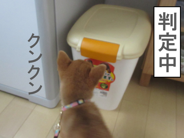 柴犬コマリ アイリスオーヤマ フードストッカー