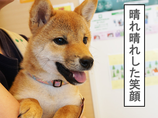 柴犬 柴犬コマリ 動物病院