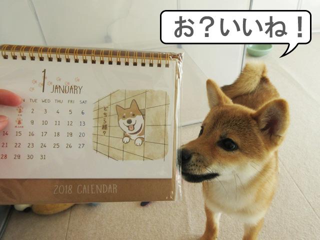 柴犬 柴犬コマリ 柴犬カレンダー