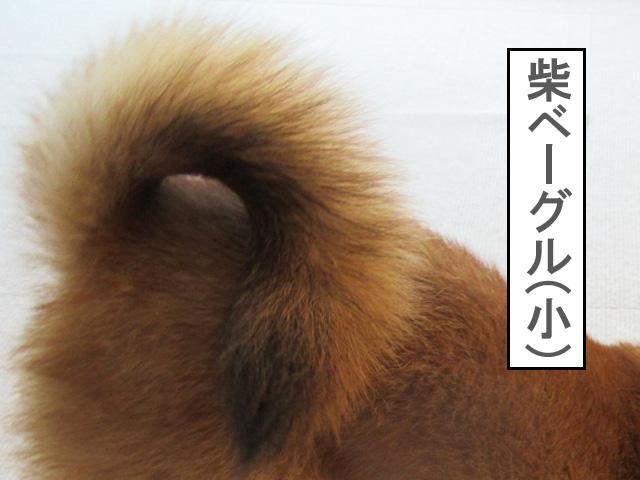 柴犬 柴犬コマリ ベーグル