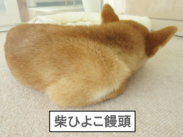 柴犬 柴犬コマリ ひよこ饅頭