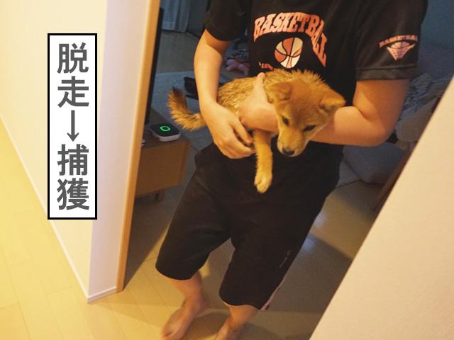 柴犬コマリ 子犬シャンプー