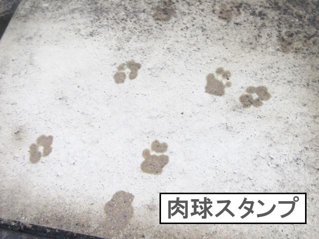 柴犬 柴犬コマリ 肉球