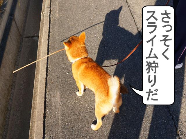 柴犬コマリ スライム