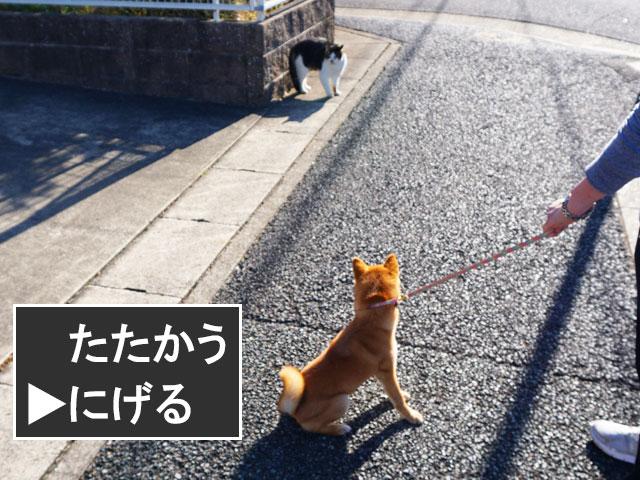 柴犬コマリ ドラクエ