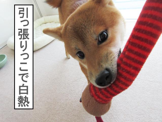 犬のおもちゃ クランチーネック