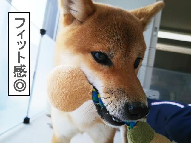 犬のおもちゃ デンタルロープTOY