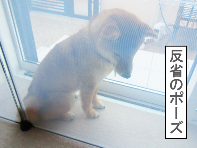 柴犬コマリ フェンス