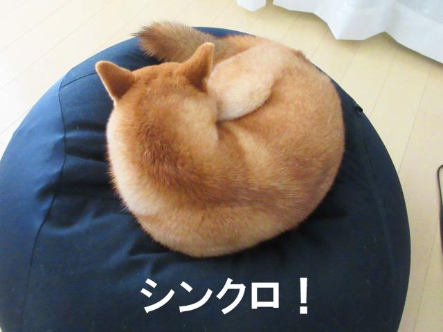 柴犬コマリ 無印良品 体にフィットするソファ