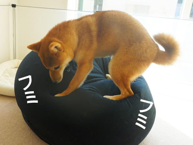柴犬コマリ 体にフィットするソファミニ