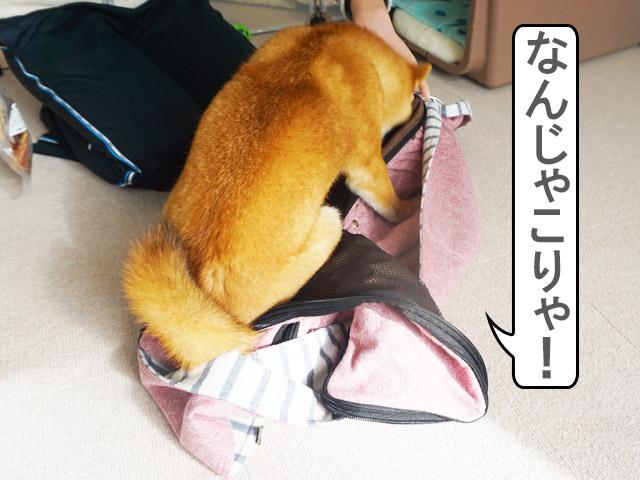 柴犬コマリ ドッグスリング