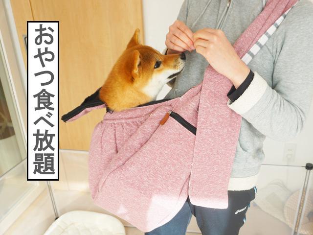 柴犬コマリ スリング