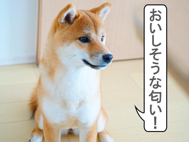 柴犬コマリ ごはん