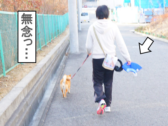 柴犬コマリ 避妊手術 エリカラ