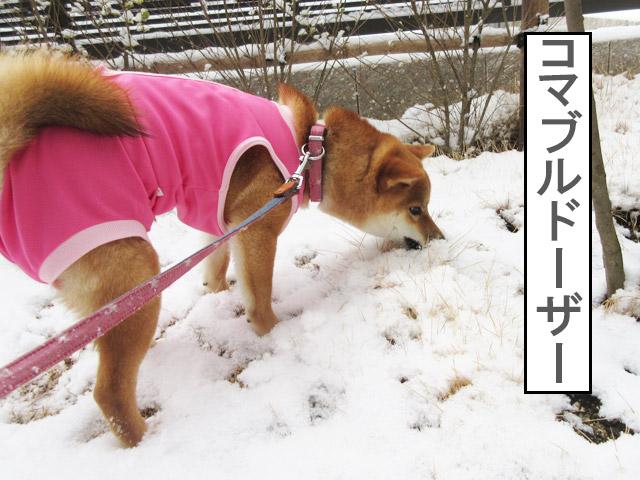 柴犬コマリ ブルドーザー