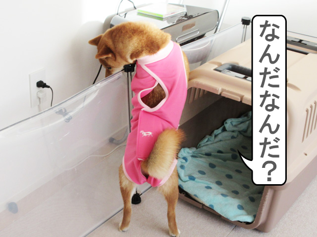 柴犬コマリ CD
