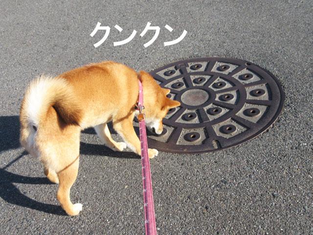 柴犬コマリ マンホール