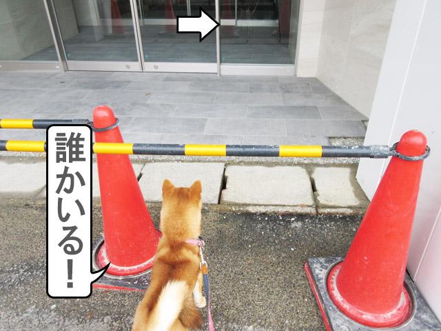 柴犬コマリ ガラス