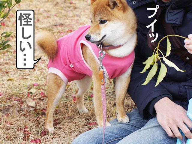 柴犬コマリ 抱っこ