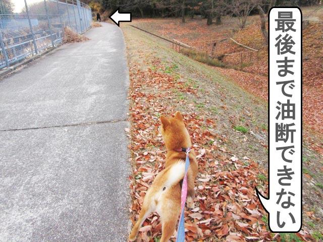 柴犬コマリ 自転車