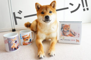 柴犬コマリ プレゼント