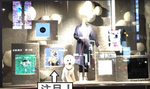 柴犬コマリ 伊勢丹新宿店 ショーウィンドウ