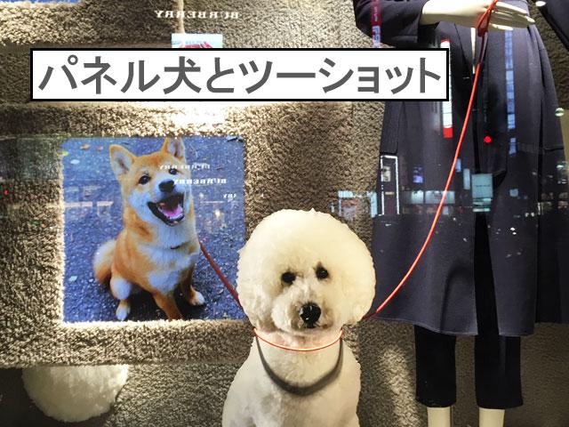 柴犬コマリ 伊勢丹 ショーウィンドウ