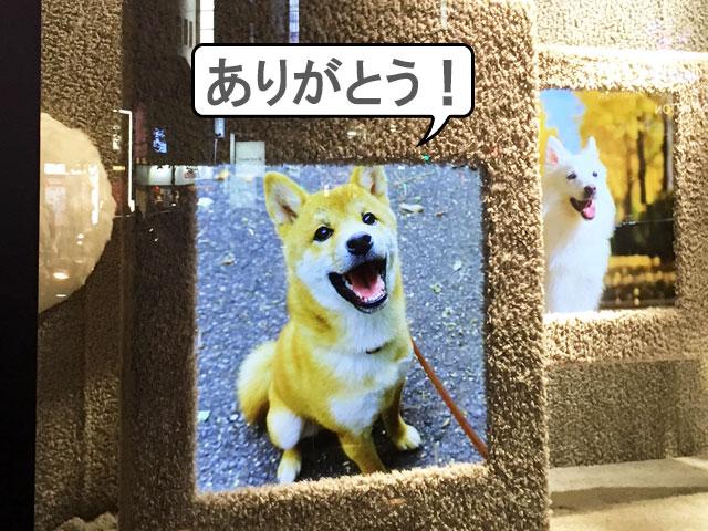 柴犬コマリ PECO 伊勢丹 コラボイベント