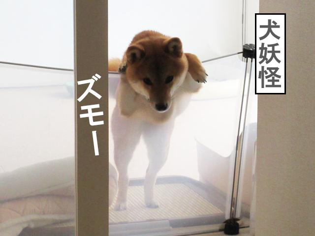 柴犬コマリ 妖怪
