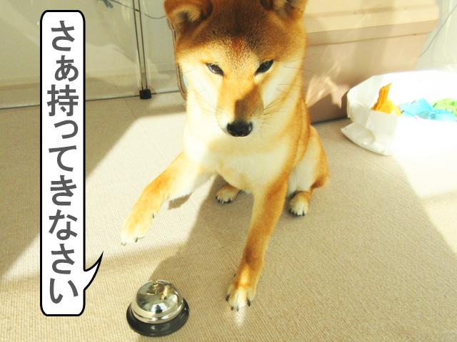 柴犬コマリ ベル おやつ