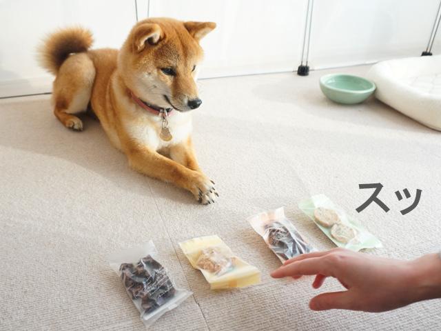 柴犬コマリ バレンタインおやつ