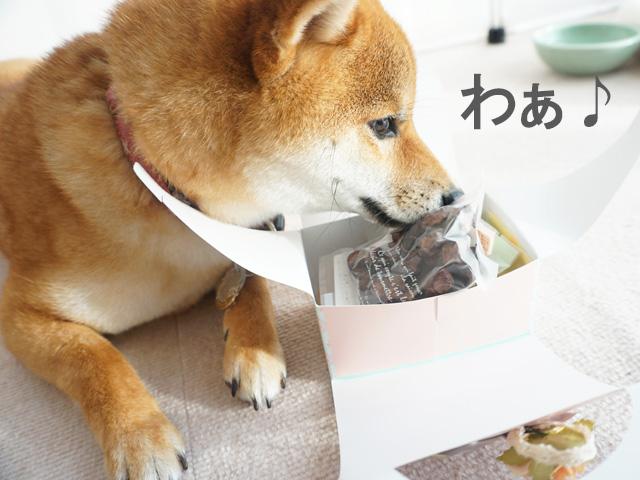 柴犬コマリ バレンタインチョコ