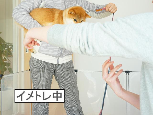 柴犬コマリ 抱っこの仕方