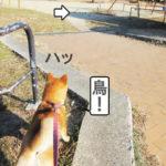 柴犬コマリ ハンター
