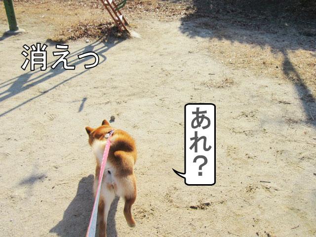 柴犬コマリ 鳥