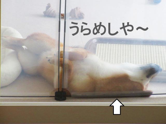 柴犬コマリ 寝相