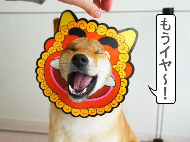 柴犬コマリ 節分 鬼
