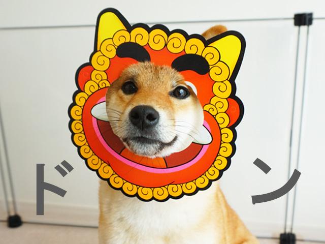 柴犬コマリ フュージョン