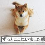 柴犬コマリ モニタリング