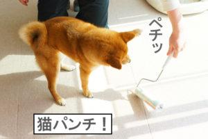 柴犬コマリ 猫パンチ