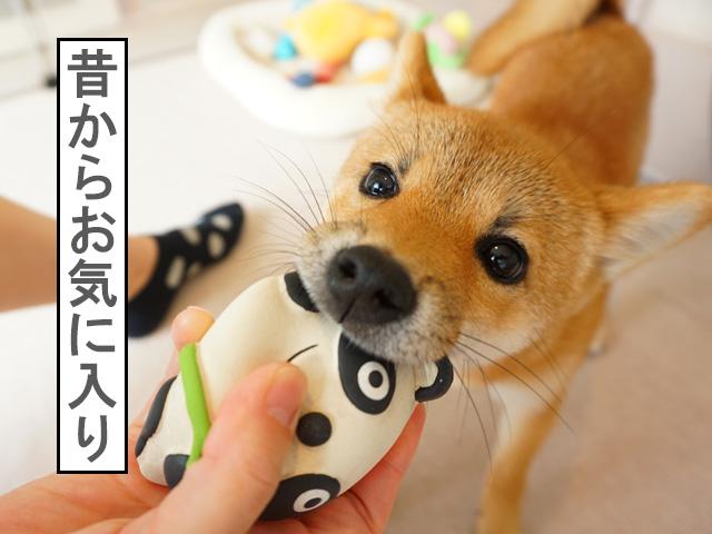 柴犬コマリ ペティオ やわらかTOY