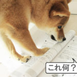 柴犬コマリ 犬資格